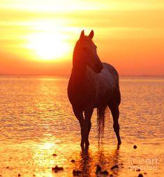 Horses:  Horse Heaven