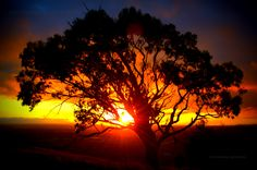 Sunset one afternoon: Melbourne. RICK BROWN