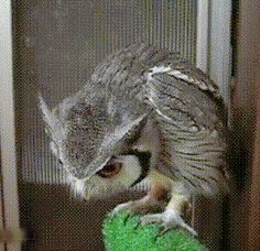 What's Got This Owl's Attention?