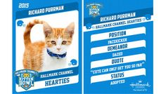 Get ready for the return of Kitten Bowl III, starring the cutest athletes in the world!