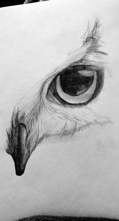 Eye Sketch Pencil Realistic 33 Ideas For can find Pencil sketching and more on our website.Eye Sketch Pencil Realistic 33 Ideas For 2019 Easy Doodles Drawings, Cool Art Drawings, Pencil Art Drawings, Art Drawings Sketches, Beautiful Drawings, Owl Drawings, Pencil Sketching, Sketches Of Eyes, Drawing With Pencil