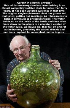 Garden in a bottle