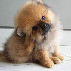 Ligit cutest PUPPY EVER!