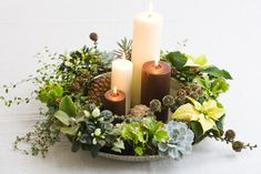 Christmas plants in new ways Christmas Flower Decorations, Christmas Plants, Christmas Arrangements, Christmas Table Settings, Christmas Candle, Christmas Centerpieces, All Things Christmas, Christmas Home, Christmas Wreaths
