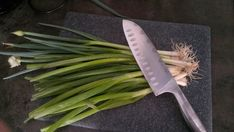 De afgesneden kontjes gebruik ik natuurlijk ook weer voor de herkweek van lente-uien.