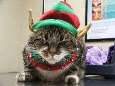 Cat Humor: Meet Five Of Santa's Cat Elves