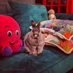Bunny Bunny, Bunnies, House Rabbit Society, Daily Bunny, My Animal, Livestock, Rabbits, Wish, Christmas Decorations