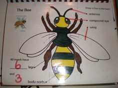 labelled diagram of a bee for children - Google Search