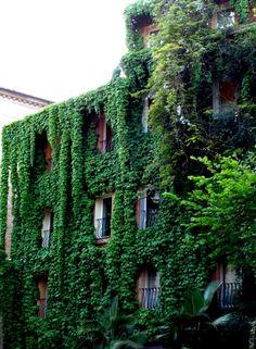 ROMA -  Manierismi/ Colour it green...