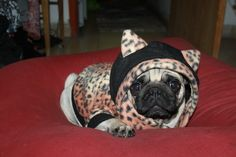 Leopard dog clothes costume