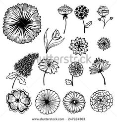 stylish beautiful flower set on blurred background concept. Vector template for web and mobile design