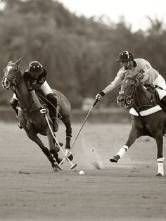 A polo pony is like a motorbike with a mind of its own, weighing half a ton.