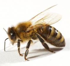 Spot and treat the symptoms of an allergic reaction to a bee or wasp sting --- Getting stung by a bee, especially for the first time, can be a startling experience. If you don't know if you or your child is allergic to bees, then you need to know what types of symptoms to look out for...
