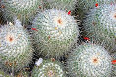 Cactus. Botanical Garden. Valencia.
