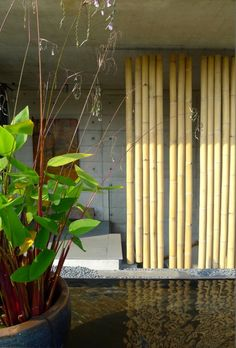 The Bamboo Curtain (rack-mounted) House in Singapore by Eco-id Architects