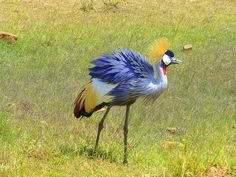Kenia Africa, Bird, Animals, Kenya, Animales, Animaux, Birds, Animal, Animais