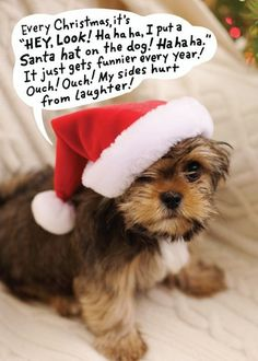 Santa Hat Puppy - Christmas Greeting Cards in Khaki | Hallmark Personalized Christmas cards from Treat.com #puppy