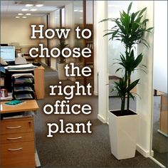 Infographic: How To Choose The Right Office Plant