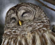 Silly owl.