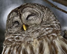 haha say what? #owls #saywhatowls #birds #saywhat