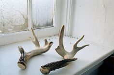 ubiquitous antlers
