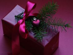 fuchsia gift wrapping idea for Christmas with evergreen sprig