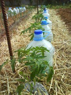 Irrigation solaire au goutte à goutte : une technique gratuite à la portée de tous