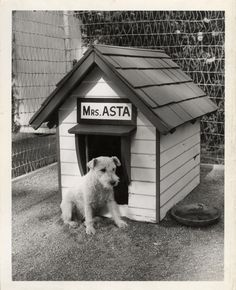 Mrs. Asta! (From the Thin Man movies)
