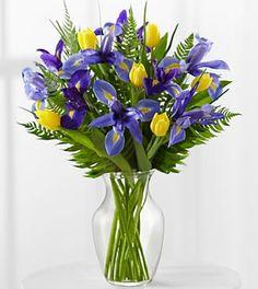 Purple iris yellow tulip