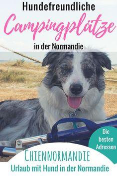 Auf welchen Campingplätzen sind Hunde nicht nur erlaubt, sondern gern gesehene Gäste? Hier findet Ihr eine hilfreiche Übersicht über hundefreundliche Campingplätze in der Normandie! #Normandie    #Normandy    #Calvados    #Cotentin    #Mont-Saint-Michel    #Urlaub mit #Hund    #UrlaubmitHund    #Hundeurlaub    #Frankreich    #France    #Camping    #CampingmitHund    #Reisen mit Hund    #Hunde