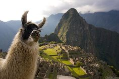 Even in the most awe-inspiring of locations, awkward animals still pose for dorky pictures.