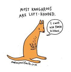 I've got some bad news about kangaroos.