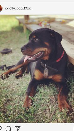 This is a long shot, but could you share a Gofundme page for us? We are trying to raise money to bring our dog home from America. We miss her very much, and need as much help as we can get. Here is the link: https://www.gofundme.com/bring-lol-the-rottie-home