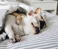 Our favorite French Bulldog sisters visited the new west elm Palm Beach store. What happened next is sure to make you smile! Animals And Pets, Baby Animals, Funny Animals, Cute Animals, Cute Puppies, Dogs And Puppies, Frenchie Puppies, Pet Dogs, Dog Cat