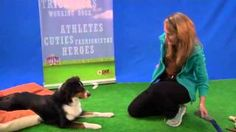 Training Tuesday! Watch our friend and wonderful trainer from All About Dogs, Renee DeVilliers demonstrate positive dog training tips  for focus and self-control with the help of her beautiful talented three year old Australian Shepherd, Nishka and a very cute little puppy ! http://www.youtube.com/watch?feature=player_embedded&v=-id1Bd9DBj4