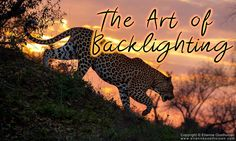This is the third incarnation of the Art of backlighting blog. As my own experience with backlighting has increased, so has my understanding of it. Central to this is understanding, is the dynamic range of light. In a practical sense its the ability for a photographer to look at a scene and know if a camera is able to capture all the stops of light within the scene.