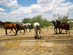 Desert Horses, somewhere in Namibia (drive to Twyfelfontein) Namibia, Deserts, Horses, Photography, Animals, Travel Destinations, Viajes, Photograph, Animales