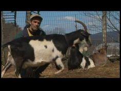 Raising Dairy Goats : Dairy Goats & Healthy Pregnancies