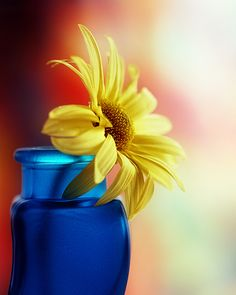 Blue and Yellow, Blue and Yellow!