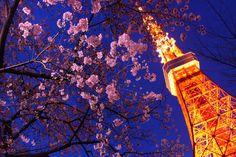Tutustu tähän mahtavaan Airbnb-kohteeseen: [0 minutes!] Under the Tokyo Tower kaupungissa Minato