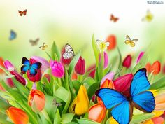 mariposas entre hermosos tulipanes