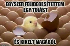first chick born hatched egg animal chicken cute baby funny pics pictures pic picture image photo images photos lol Funny Easter Memes, Funny Memes, Hilarious, Jokes, Funny Pics, Videos Funny, Baby Animals Pictures, Cute Baby Animals, Funny Animals
