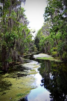 The Florida Everglades| Serafini Amelia|  The Everglades - South Florida.