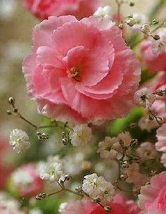 Hintergrundbilder Kostenlos Blumen blumen hintergrundbilder herunterladen kostenlos tulpe