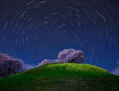 KAGAYA(@KAGAYA_11949)さん | Twitter https://twitter.com/KAGAYA_11949/status/851775164287037441 古墳の頂に咲き誇る満開の桜。 明るい月光に照らされ、菜の花とともに夜空に浮かび上がっていました。 北の空の星々が北極星を中心に軌跡を描いています。(昨日、埼玉県にて撮影)