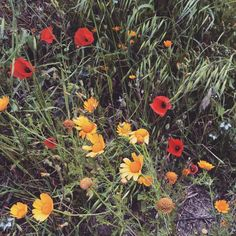 Spring flowers from #Sicily
