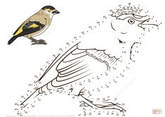 Red Browed Pardalote dot to dot from Birds category. Select from 31983 printable crafts of cartoons, nature, animals, Bible and many more. Bird Coloring Pages, Free Printable Coloring Pages, Coloring Pages For Kids, Adult Coloring, Coloring Books, Dot To Dot Printables, Printable Crafts, Bird Drawings, Animal Drawings