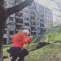 Nach einer schwindelerregender Aktion und wackligen Knien hängt die neue Schaukel am Baum. Die Schlingen von Mammut halten über 2000kg aus. Denke da macht vorher der Baum schlapp. @mammut_absolute_alpine #schaukel #kidsplay #höhenangst #leiter