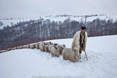 "Bran, Brasov County, Romania ""Shepherd with his sheep"" photograph by Marian Mocanu Places To Travel, Places To Visit, Perfect World, Countries Of The World, Animals And Pets, Countryside, Beautiful Places, Visit Romania, Snow Forest"