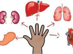 Minden ujjhoz köthető egy szerv – Nyomd 5 percig, hogy elmúljon a fájdalom Minden, Sport, Tableware, Deporte, Dinnerware, Sports, Tablewares, Dishes, Place Settings